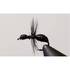 Black Ant (Hard Body) - Singles